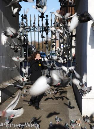 Sphère Web- Vol de pigeons à Londres